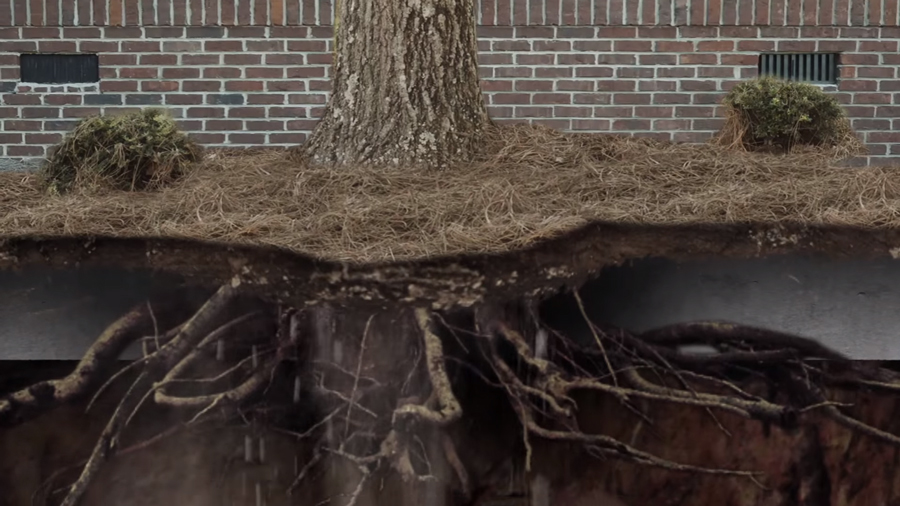 How Tree Roots Can Harm Your Foundation