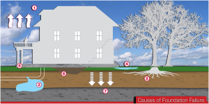 Trees Most Likely To Cause Foundation Damage Ram Jack Of