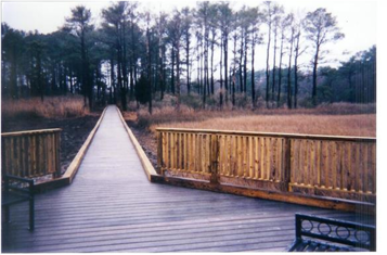 Boardwalk in wooded area