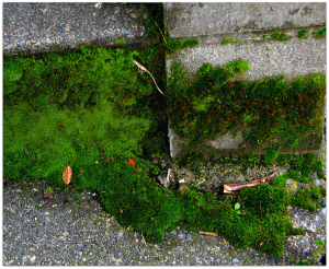 Moss growing on foundation