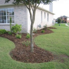 Sloped landscape in front of house